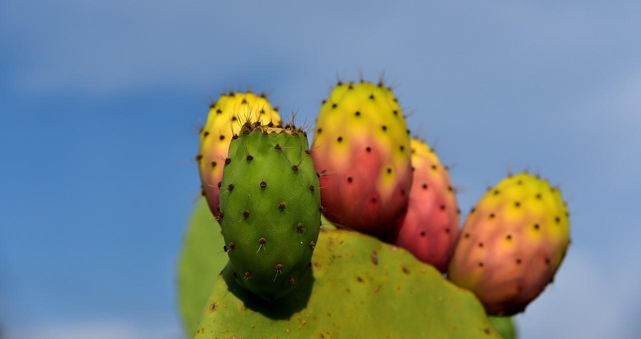cactus-3622543_1280